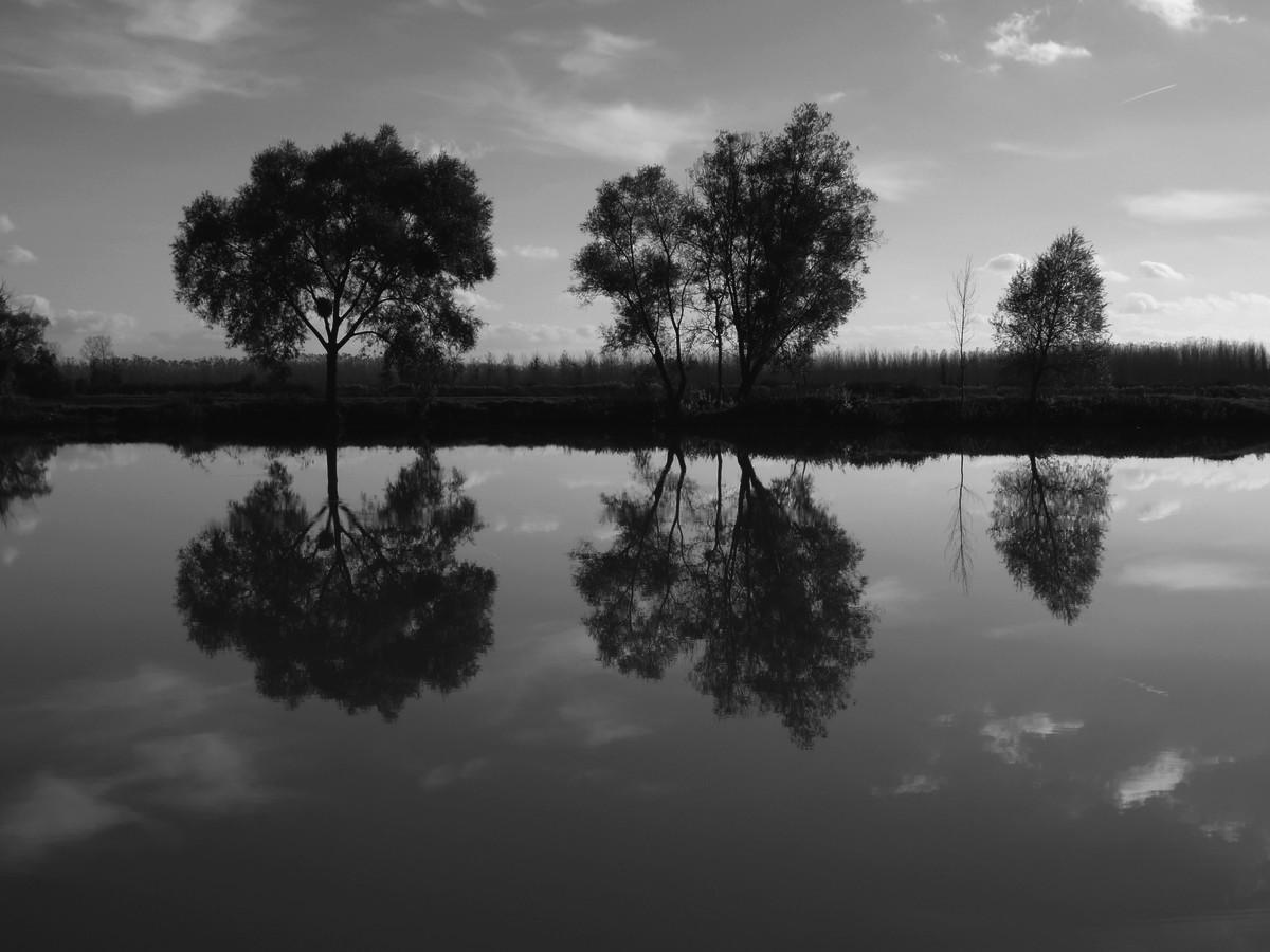 Montreur d 39 images le miroir for Comme dans un miroir