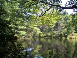 photo of Meadow Pond, Great Brook Farm, Carlisle, MA