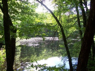 photo of pond in Noanet Woodlands, Dover, MA