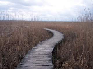 photo of Hellcat Trail, Plum Island, MA