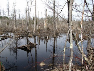 photo of Cedar Swamp, Essex, MA