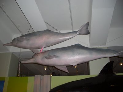 Gay dolphins