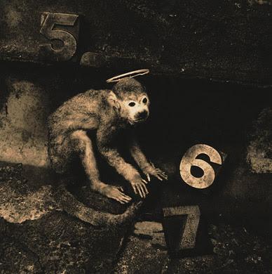 06_monkey