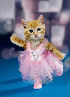 Cute Cats Pics on Fun Blog  Cat Cute