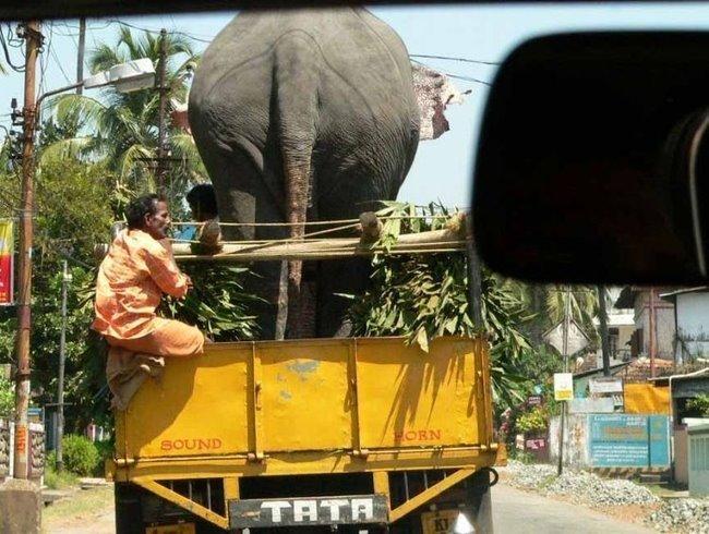 [thumbs_Indien%20-%20Special%20Picdump_63.jpg]
