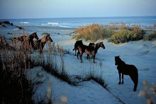 The Pristine Natural Beauty of the Outer Banks, NC