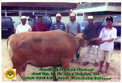 Palembang-SUMSEL: Sapi dari Gubernur Sumsel Bp.Ir. H. Alex Nurdin ,SH