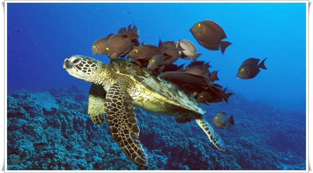 sea turtle wallpaper. turtle wallpaper