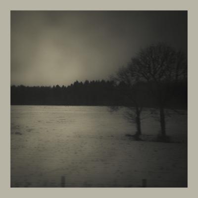 arvore preto e branco poesia