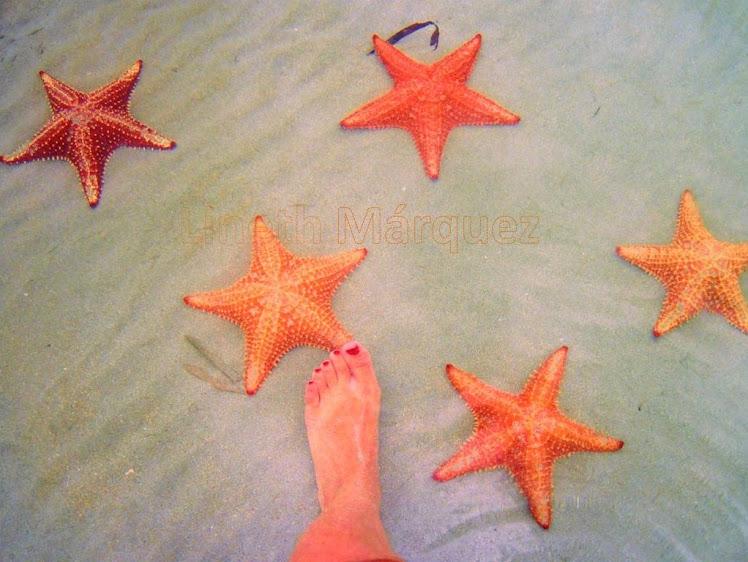 Estrellas de mar y mi pie
