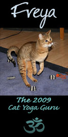 2009 Cat Yoga Guru!