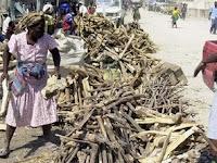 Campagne-de-reforestation-a-la-frontiere