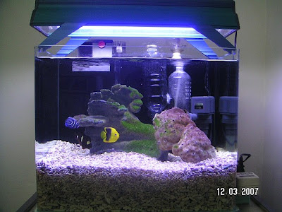Love aquariums a small salt water fish aquarium for Saltwater fish for small tank