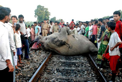 Elephants Killed by Goods Train Accident