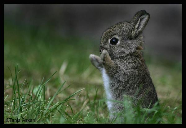 Amemos a los animales como ellos nos aman...