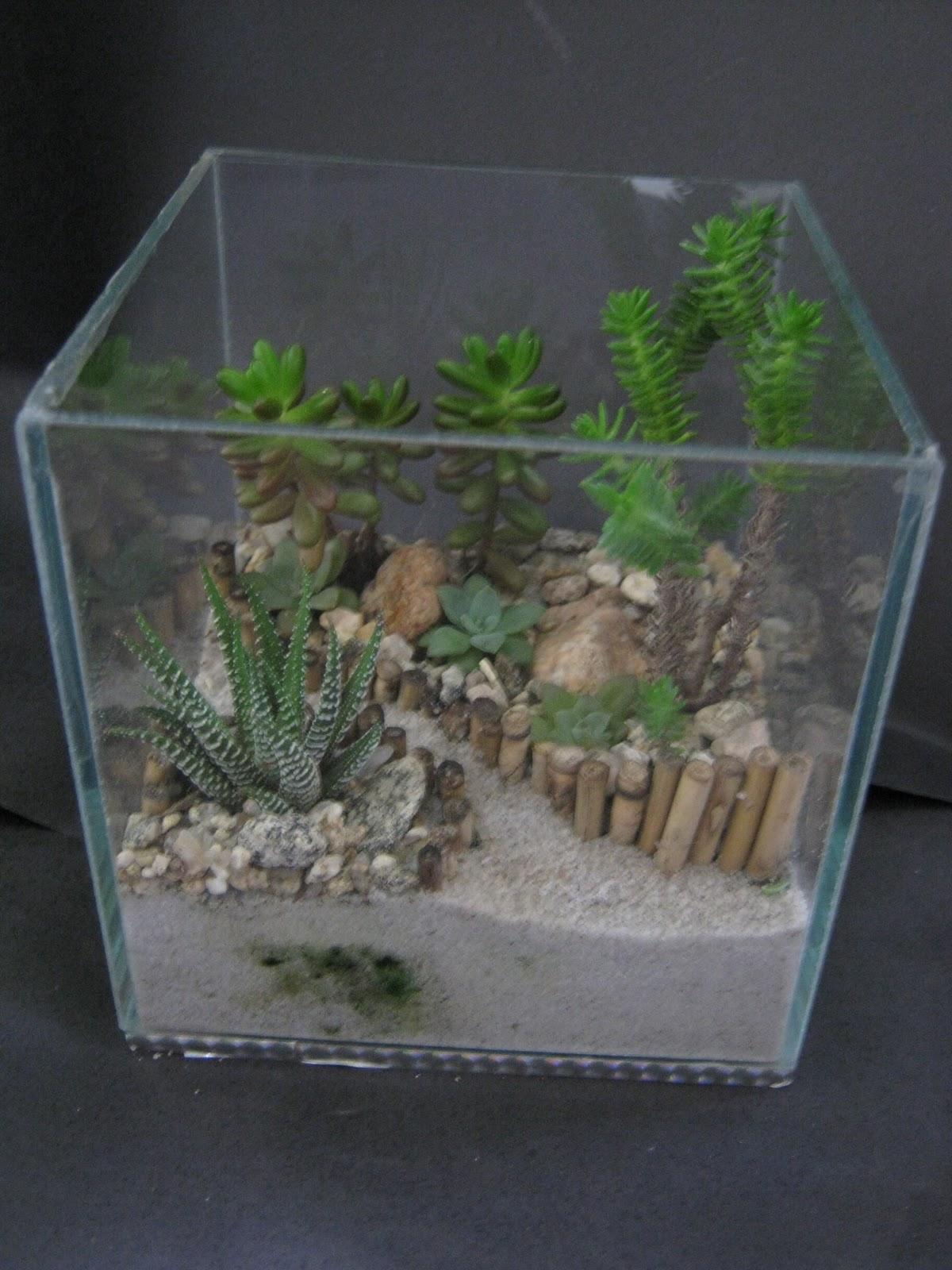 mini jardim de vidro: : Mini-Jardins de Suculentas em Vidro e em cachepô de madeira