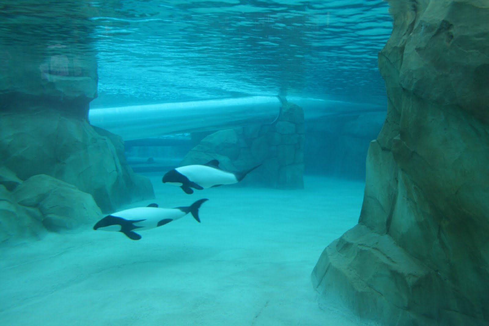 Orlando water parks they are not baby killer whales