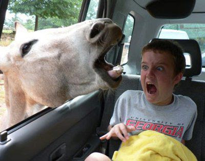 scared boy and horse