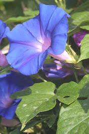 Floral K5