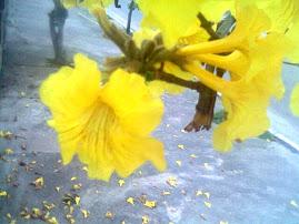 Floral de Ipê