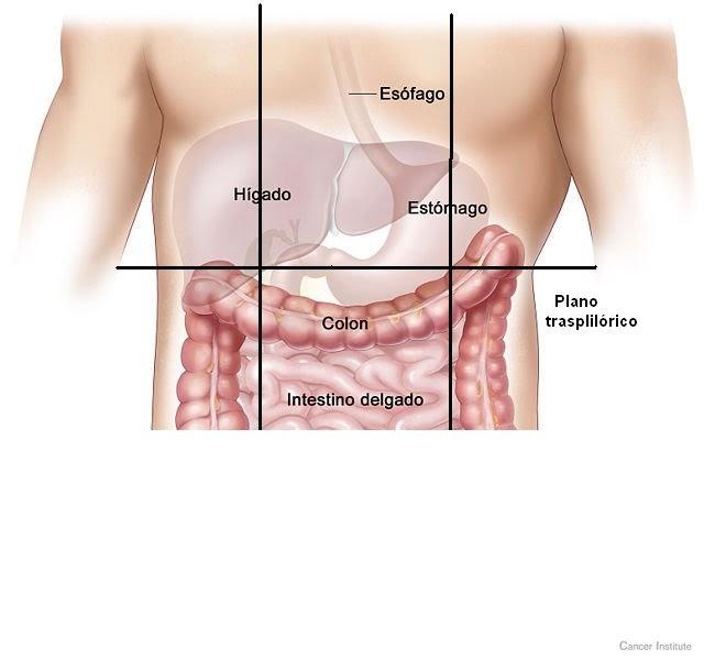 estomago: Anatomía de Superficie del Estómago