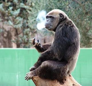 Il restauro di una potenzialità dopo per smettere di fumare