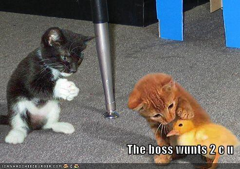 The boss wunts 2 c u