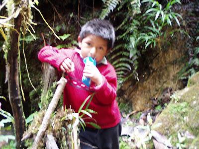 El hijito de Eutropio. Chontabamba, Perú