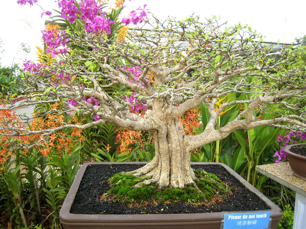 Keats The Sunshine Girl Awesome BONSAI