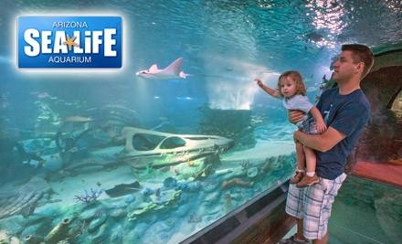 Alicia 39 S Deals In Az Expired Sea Life Aquarium 9