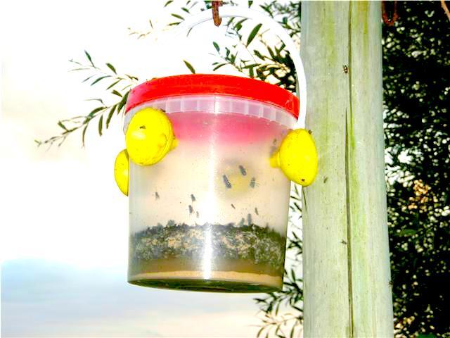 Trampas africanas para moscas eco fly trampas africanas - Trampa casera para moscas ...