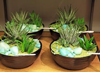 Haworthia, Aloe
