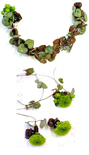 hårblommor, santini Yoko Ono, Ceropegia woodii