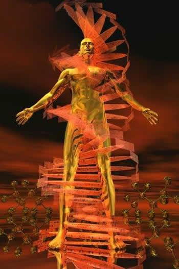 http://2.bp.blogspot.com/_5T7NaLqrpbI/SwxwYfbm7iI/AAAAAAAAAsI/RNdSRB9TZlE/s1600/ADN.jpg