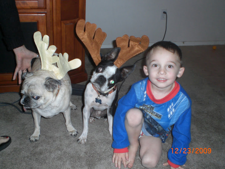 Logan and his puppies 2009