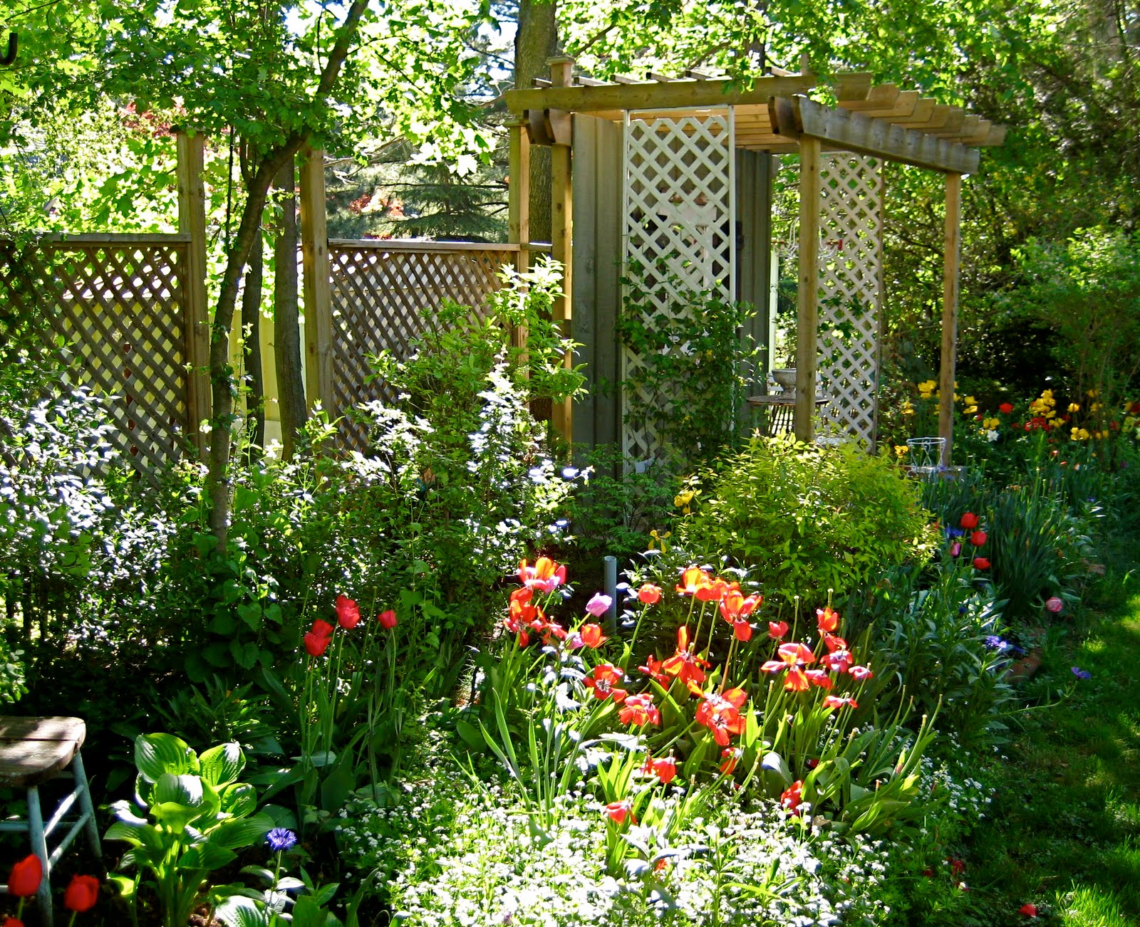 Lattice In My Garden, A Lovely Memory | PRISCILLA MAE et al