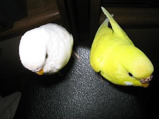 Angel & Sonny