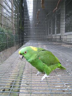 amazon at the parrot refuge, NL