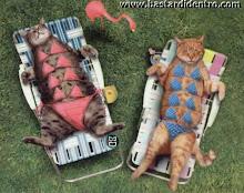 Gatti in piscina
