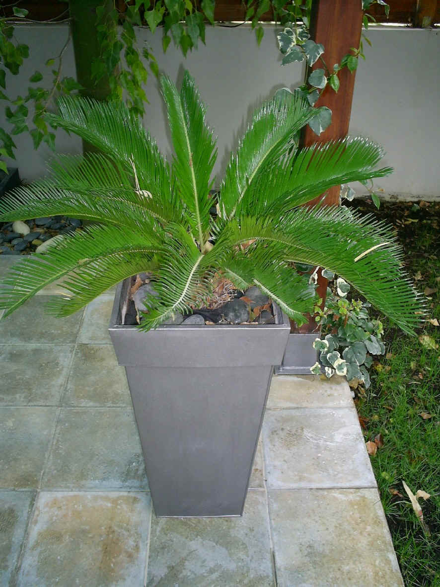Homez deco kreative homez outdoor plants for Outside plants and shrubs