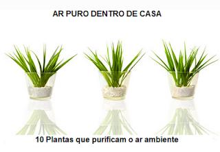 10-plantas-interior-que-purificam-ambiente