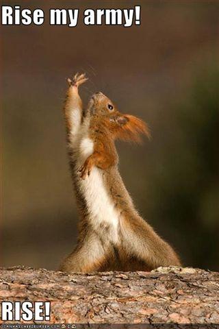 [squirrel-has-an-army.jpg]