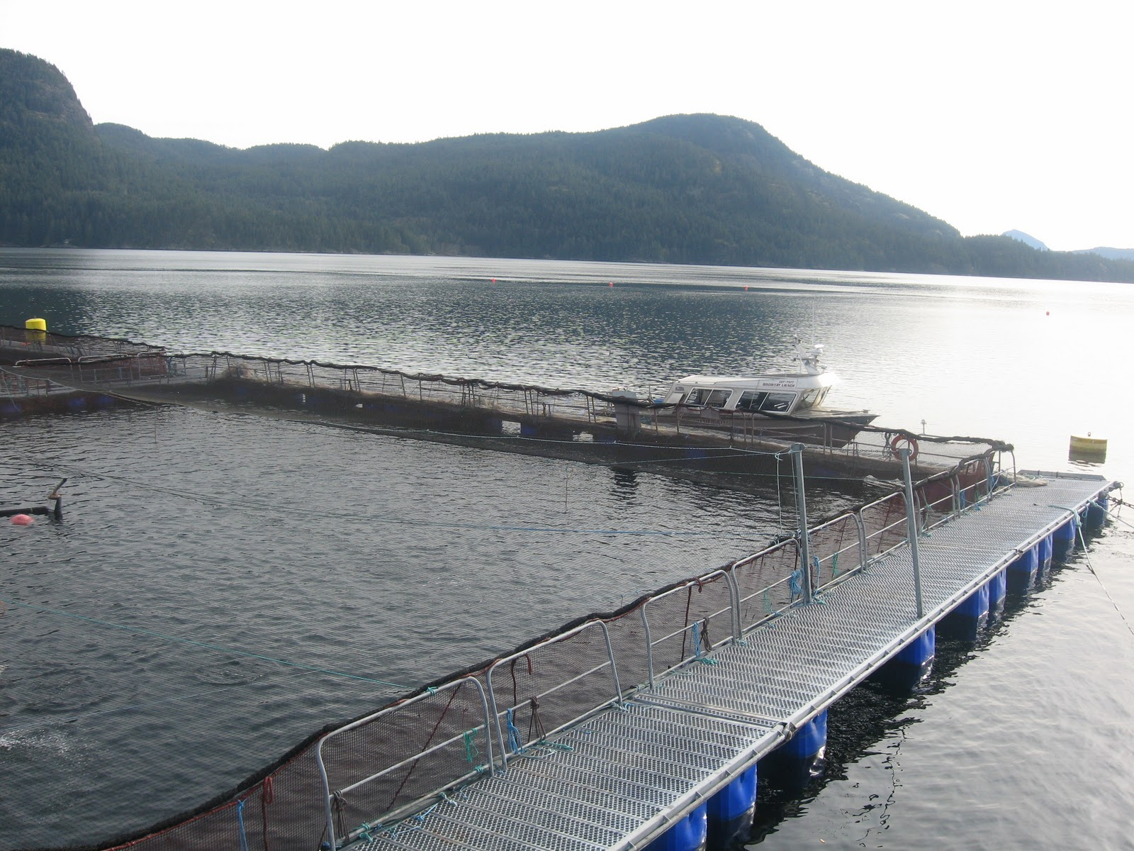 Fish Farms Vancouver Island
