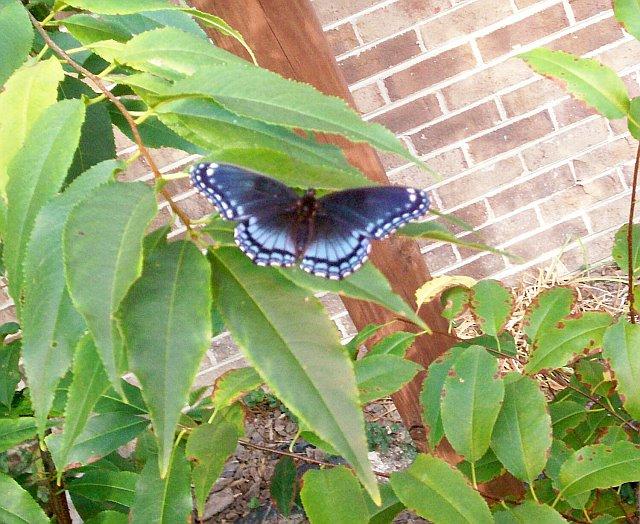 My Butterfly 8-13-07