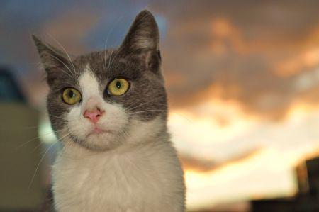 Mi Gato Gris