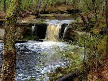 Yes, Florida has waterfalls