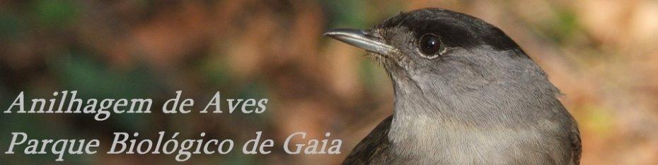 Anilhagem de Aves no Parque Biológico de Gaia
