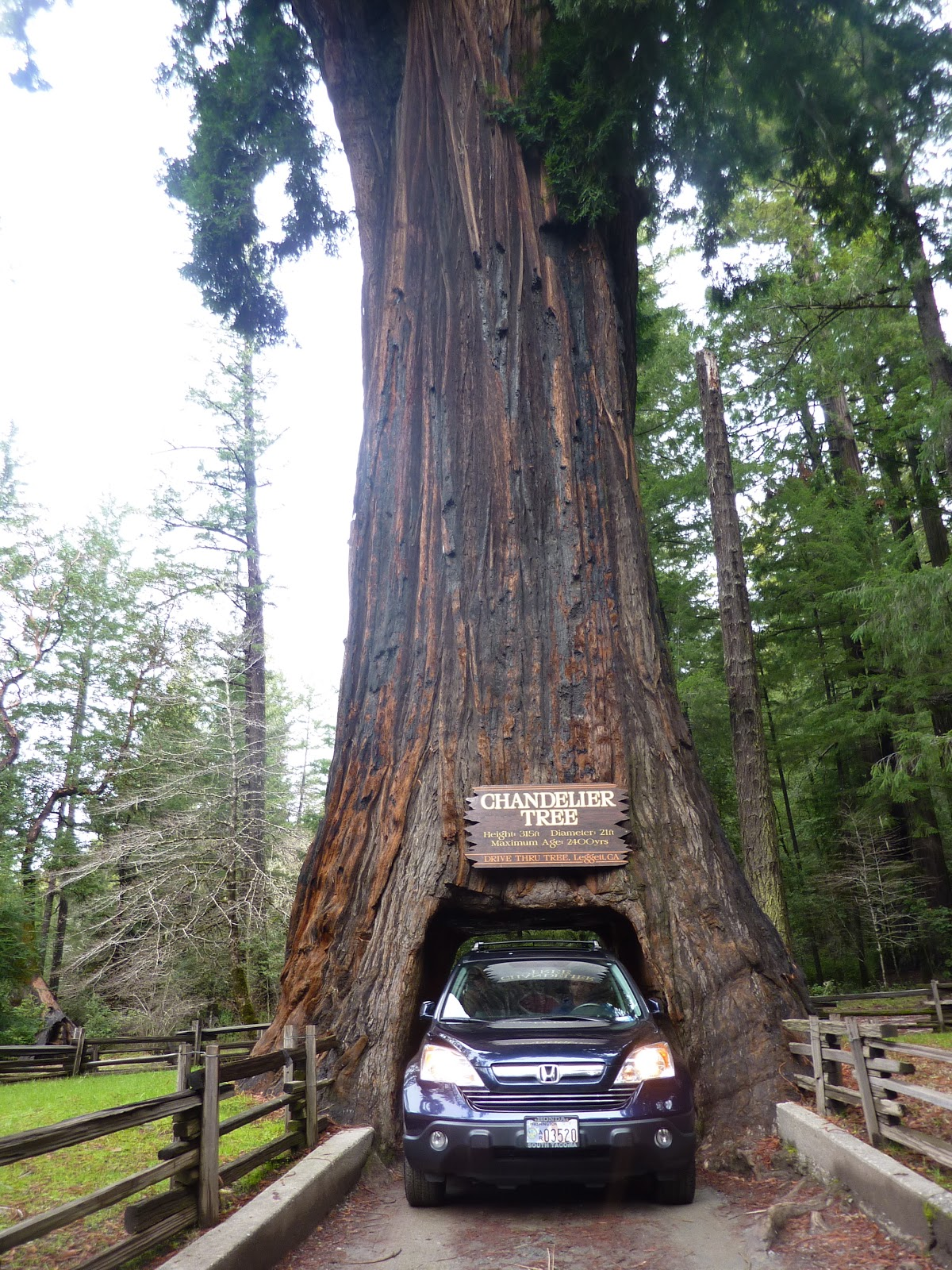 Living the life of an infantrymans wife the chandelier tree driving the crv through the chandelier tree arubaitofo Gallery