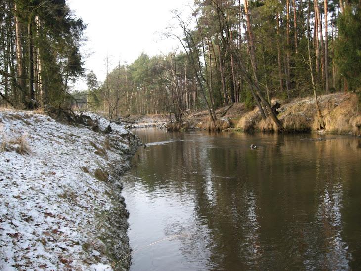 Leśna rzeka zimą