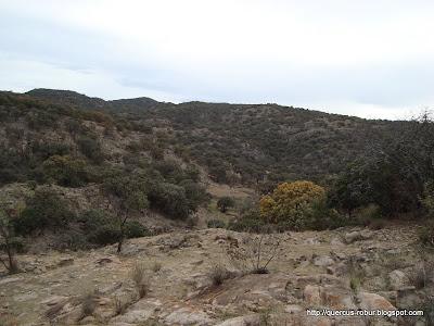 Cañada, robles y la punta del cerro